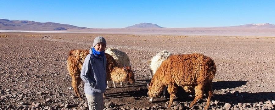 Lama et compagnie